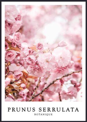 Japansk Kirsebær plakat