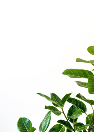 Grønne blade minimalistisk