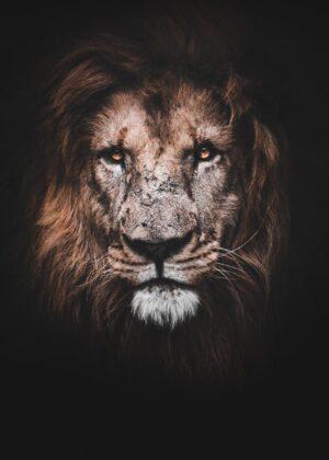 Dyrene Konge, Løven