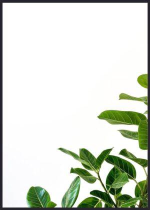 Minimalisme plante plakat
