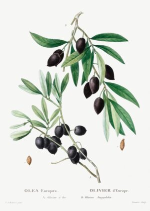 Oliven plakat