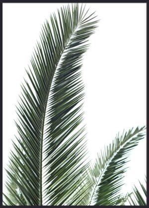 Palmeblade
