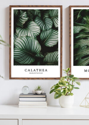 Monstera og Calathea Sæt