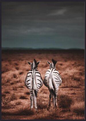 Zebraer på savannen
